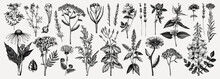 Medicinal Herbs Collection. Ve...