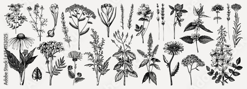 Photo Medicinal herbs collection