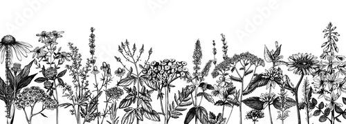 Hand drawn medicinal herbs banner design Billede på lærred
