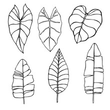 Set Of Exotic Tropical Leaves,...