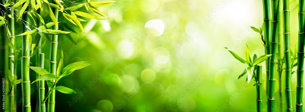 Fototapeta Fresh Bamboo Trees In Forest With Blurred Background