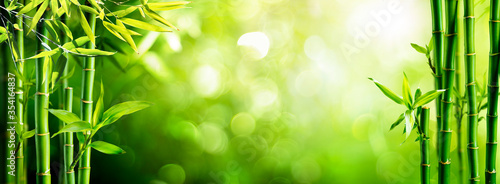 Fresh Bamboo Trees In Forest With Blurred Background