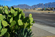 Opuntia Sp. Cactus And Agava Sp. In Landscape Design Near A Road In A Small Town In New Mexico, USA