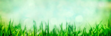 Grass With Natural Green Bokeh...