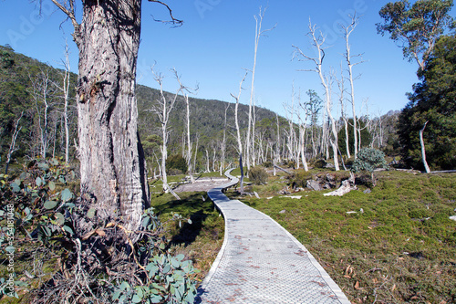 Valokuvatapetti The Overland Track is an Australian bushwalking track traversing Cradle Mountain-Lake St Clair National Park, at the north of the Tasmanian Wilderness World Heritage Area