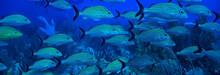 School Of Fish Underwater Phot...