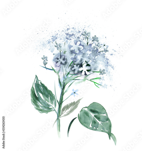 Fototapety, obrazy: Watercolor Hortensia Flower.  Hand Painted Illustration.