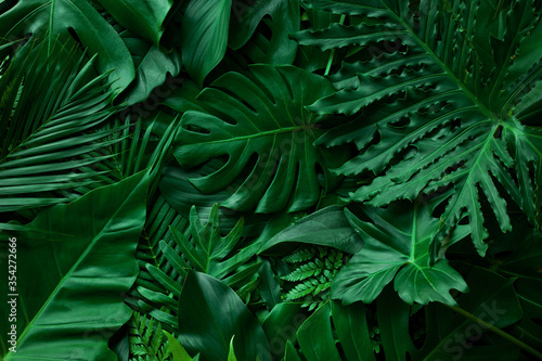 closeup nature view of green monstera leaf and palms background. Flat lay, dark nature concept, tropical leaf