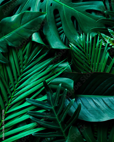 Fototapety, obrazy: closeup nature view of green monstera leaf and palms background. Flat lay, dark nature concept, tropical leaf