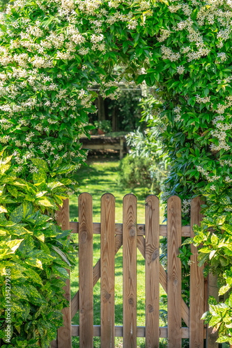 gate in the garden with booming jasmine #354279268