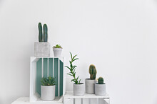 Cactus And Succulent In Pots O...