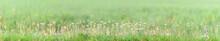 Green Summer Background Landsc...
