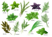 Fresh Herbs Collection: Arugul...