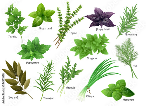 Fotografía Fresh herbs collection: arugula, dill, parsley, green chives, oregano, green and purple basil, marjoram, thyme, tarrgon, bay leaf, peppermint, rosemary