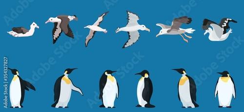 Fotografija albatrosses and penguins large selection. bright characters