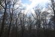 Las wiosną, piękne niebo