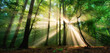 Leinwanddruck Bild - Luminous rays of sunlight shining through the mist and green foliage in a forest clearing, a panoramic landscape