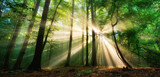 Fototapeta Landscape - Luminous rays of sunlight shining through the mist and green foliage in a forest clearing, a panoramic landscape