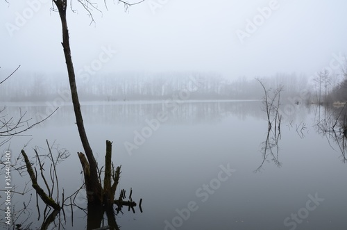 Selective focus of little trees in a spooky and foggy lake - great for wallpaper Tapéta, Fotótapéta