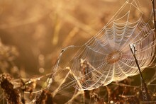 Spider Web And Plants In A Morning Fog At Sunrise, Close-up. Mysterious Forest Scene. Latvia. Golden Sunlight. Macro Photography, Insects, Environmental Conservation Theme