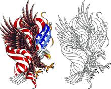 Classic American Bald Eagle Wi...