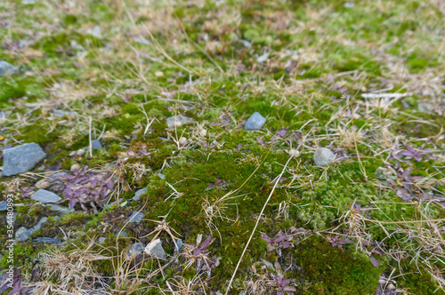 Photo High altitude cold climate green moss on a rock