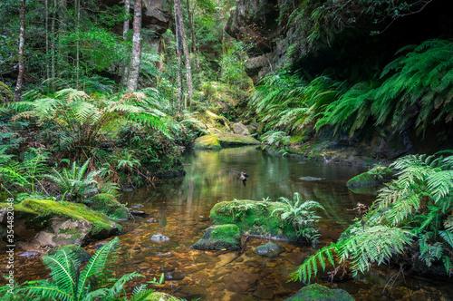 Fényképezés Tropical rainforest landscape with water and green ferns