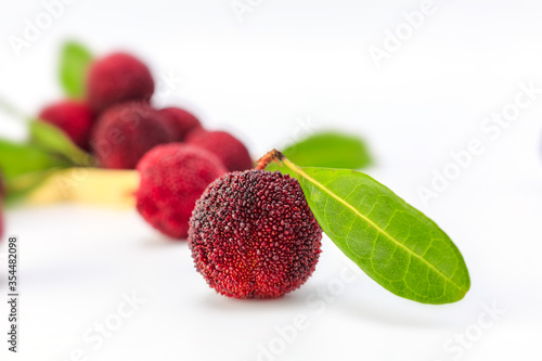 Cuadros en Lienzo Red bayberry on white background