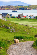 View Of Iona An Island In Scot...