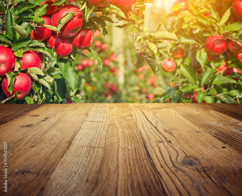 Fototapeta autumn apple orchard background obraz