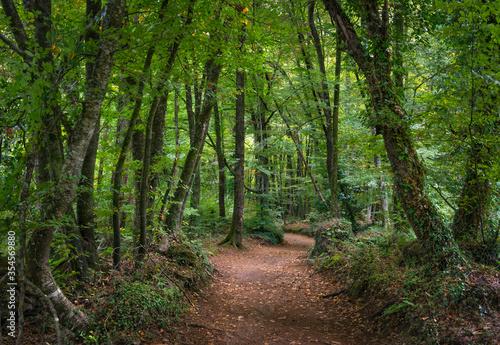 El bosque magico Canvas Print
