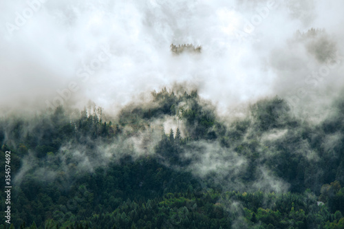 Fotomural Photo of beautiful moody misty green coniferous forests in Alps