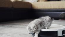 Scottish Fold Kitten Rides On A Vacuum Cleaner