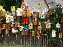 Many Different Shapes Bird Fee...