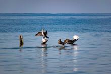 Large Cormorants Sit On Metal ...