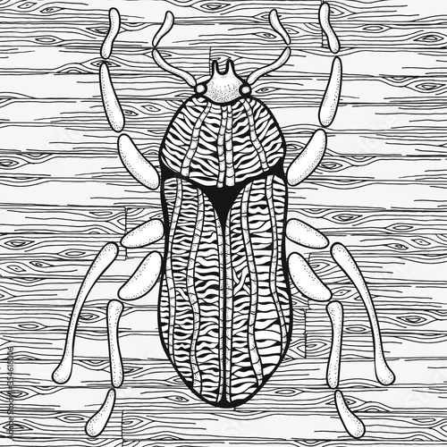 Obraz Bug. Hand drawn insects illustrations. Big beetle. Adult coloring book page. Black and white Vector - fototapety do salonu