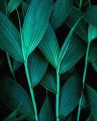Fototapeta Drzewa closeup nature view of green leaf background, dark wallpaper concept.