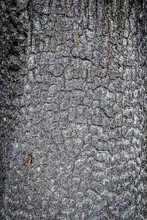 Close Up Of A Burnt Tree In Ma...