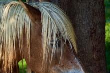 Close Up Of A Browne Horse Hea...