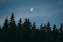 The Moon In The Blue Daytime Sky With The Tops Of Fir Trees