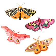 Hand Drawn Watercolor Set With Moths Isolated On A White Background. Pink Moths, Tiger Moths, Emperor Moth.