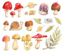 Mushroom Snail Willow Birch Leaf Cep Boletus Rough Fly Agaric Amanita Chanterelle Toadstool Russula Autumn Summer Forest Watercolor Set Isolated