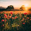 Sunset over Poppy Field in Midlothian Scotland