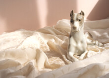 Little Porcelain Figure Of A L...