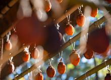 干している日本の柿