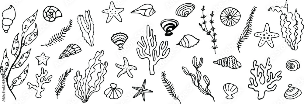 Fototapeta Big set of seabed with seashells, starfish, coral, seaweed. Vector illustration. Hand drawn doodle.