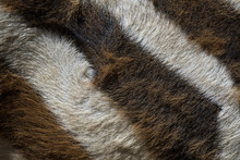 Zebra Fur Up Close.