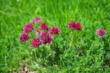 Some Purple Flowers In A Mountain Prairie