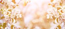 Apple Tree Floral. Bright Summ...