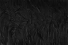 Blur Beautiful Black Grey Bird...